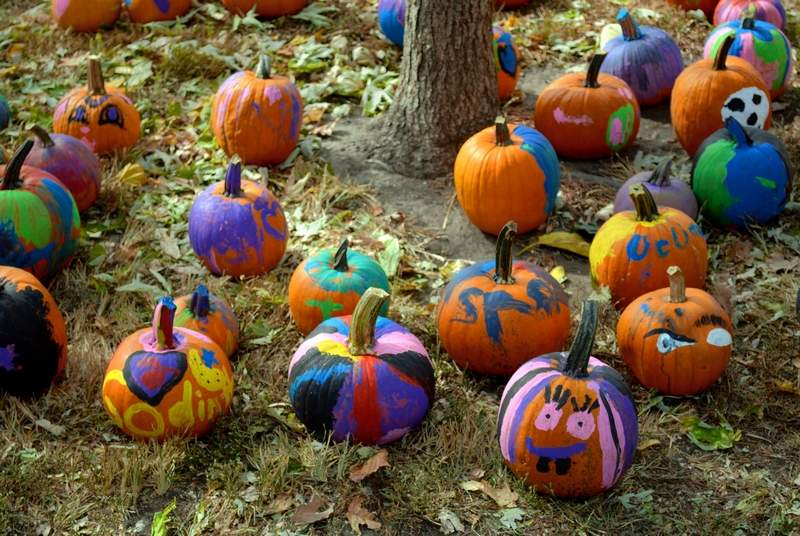 Nearly 250 pumpkins were donated to be used for the kids pumpkin painting. By the time the festival was over, nearly all of them had been decorated.