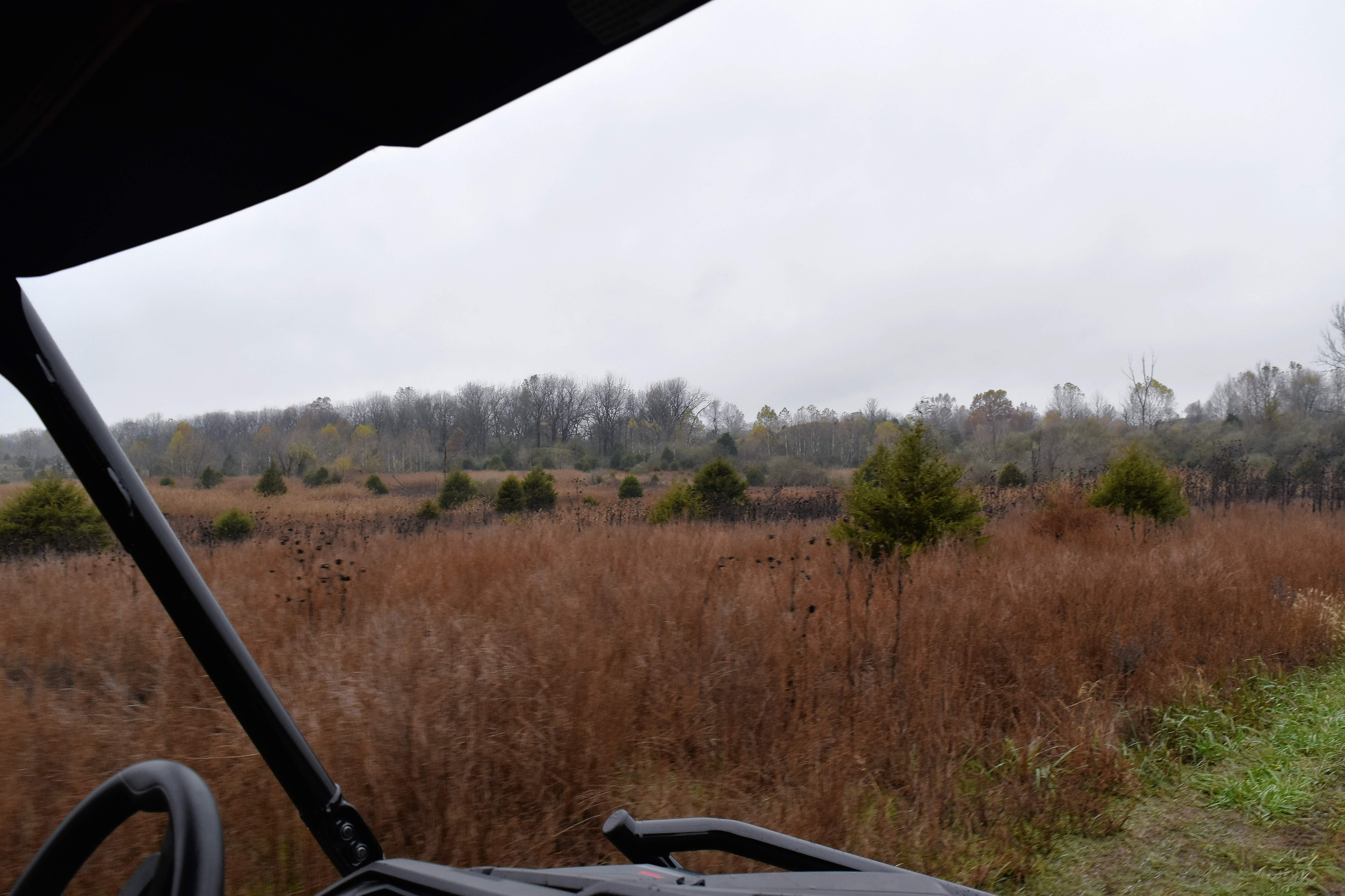 A view of the Sahara Woods landscape from within a side-by-side off-highway vehicle.
