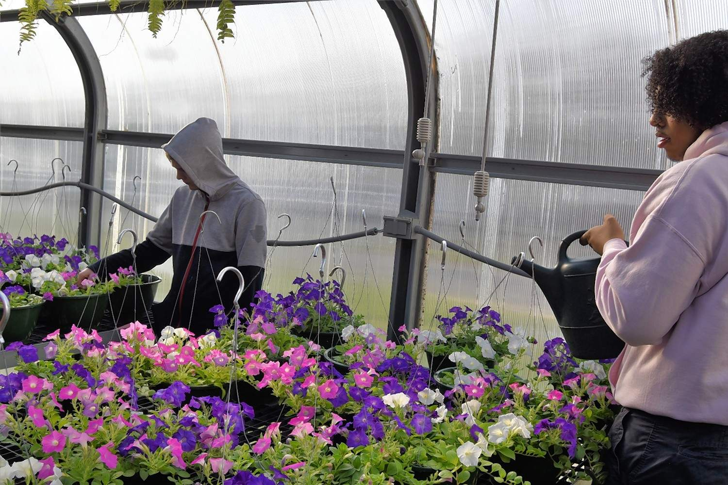 Zach Gibbs, right, waters hanging baskets of petunias Wednesday morning while Ricky Choate examines some flowers.