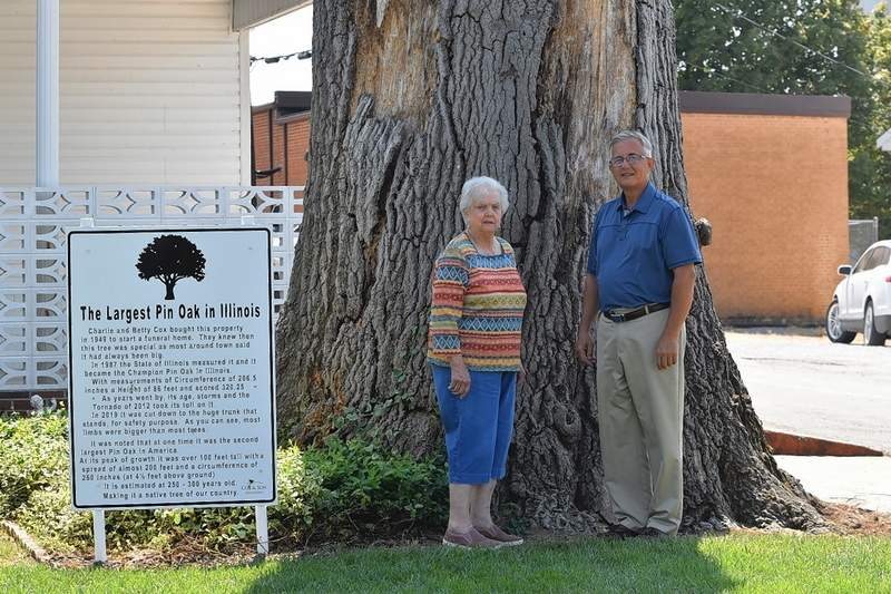 Tony Cox and his mother, Betty Cox, stand next to the base of the trunk of the one-time champion pin oak of Illinois.