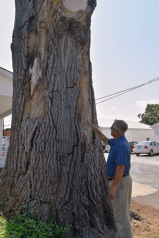 Tony Cox points to a spot, barely visible, where, as a boy, he once hung a basketball hoop on the trunk of the giant pin oak tree.