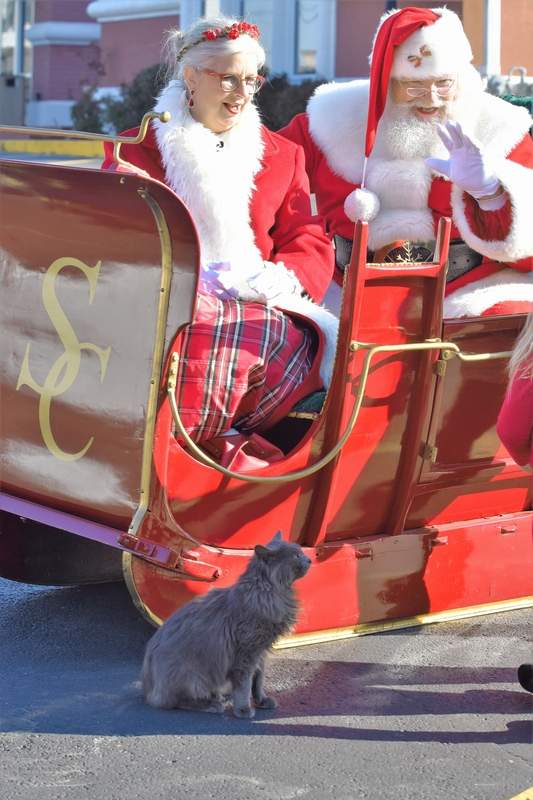 Santa Claus and Mrs. Claus sit in their sleigh as a neighborhood cat enjoys the festivites at Harrisburg District Library Saturday.