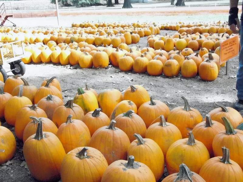 After being unable to open last year due to the COVID-19 pandemic, Bandy's Pumpkin Patch will be back this year bigger and better than ever.