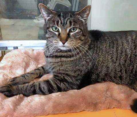 Samantha, shown here, is part of a trio of cats that have been through thick and thin together.